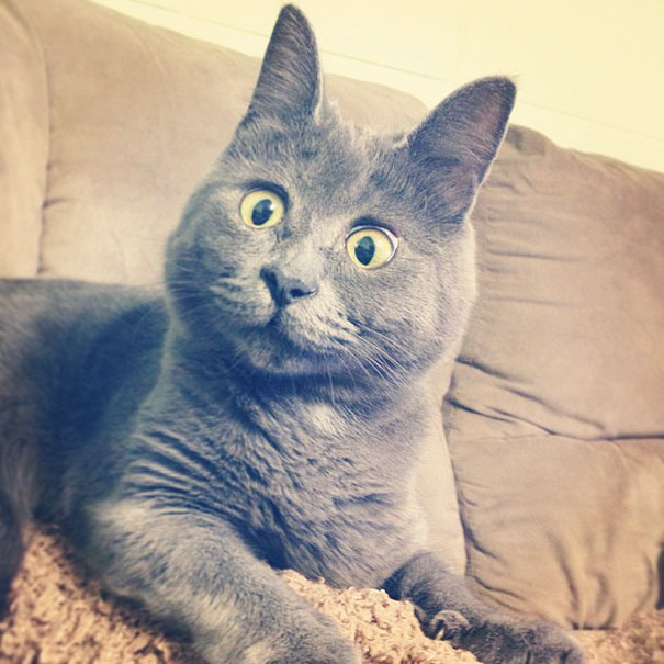surprised-cat-hydrocephalus-kevin-theadventuresofkev17