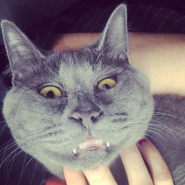 surprised-cat-hydrocephalus-kevin-theadventuresofkev21