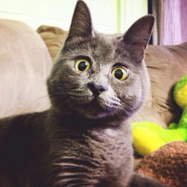 surprised-cat-hydrocephalus-kevin-theadventuresofkev23