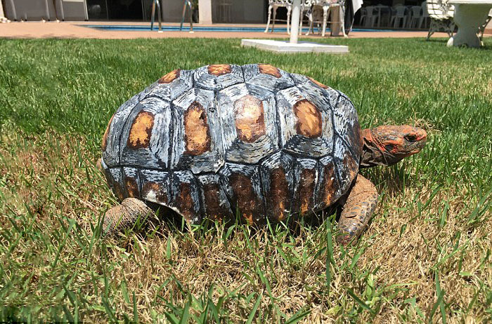 Injured Tortoise Receives Worlds First D Printed Shell Bored Panda - Tortoise gets 3d printed shell