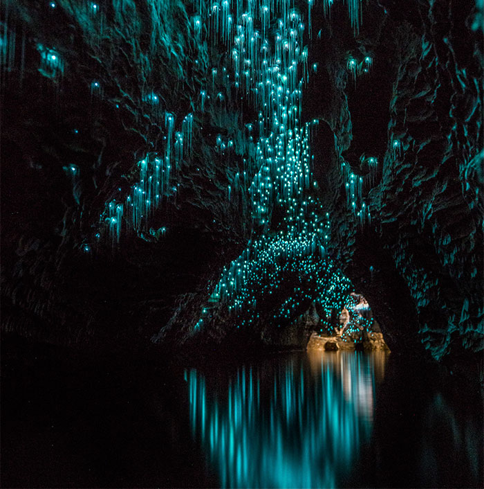 Glow Worms Turn New Zealand Cave Into Starry Night And I Spent Past Year Photographing It