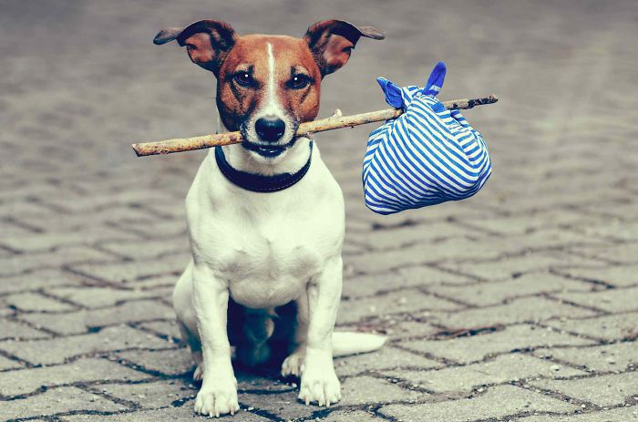 I've Learned This 7 Dog Travel Tips