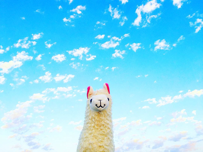 Llama With No Drama Goes On Vacations Around The World