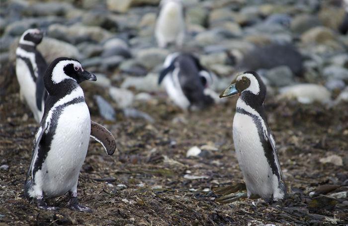 Bird Dress Up Penguin