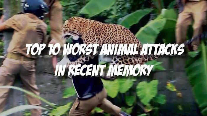 Top 10 Worst Animal Attacks
