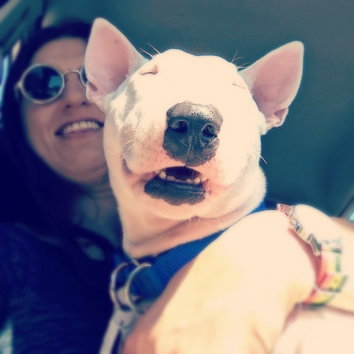 True Happieness From Zara – Bull Terrier