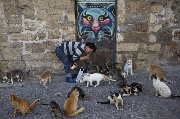 01262016-cats_15-1020x678-575833bb4a53f.jpg