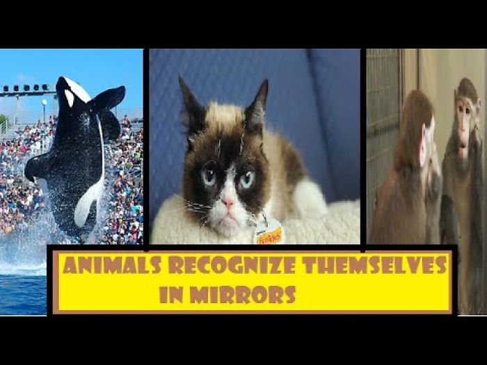 Animals Who Passed The Mirror Test