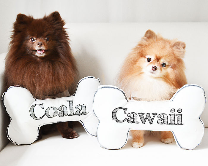 Meet Coala And Cawaii, The Two Pomeranian Fluff Balls That Changed My Life