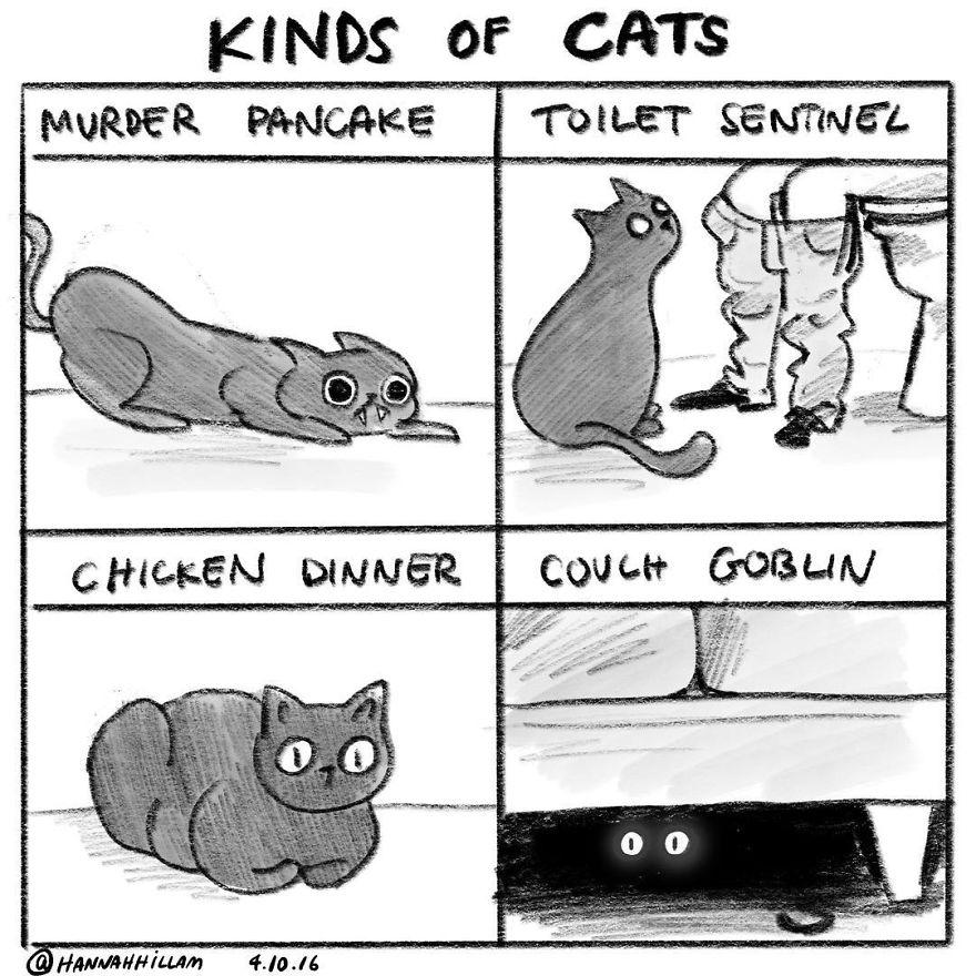 Modern-cat-lady-comics-hannah-hillam