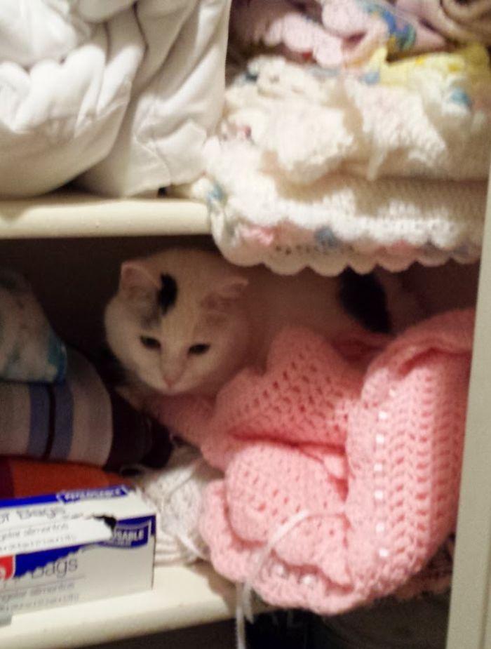 Closet Napper