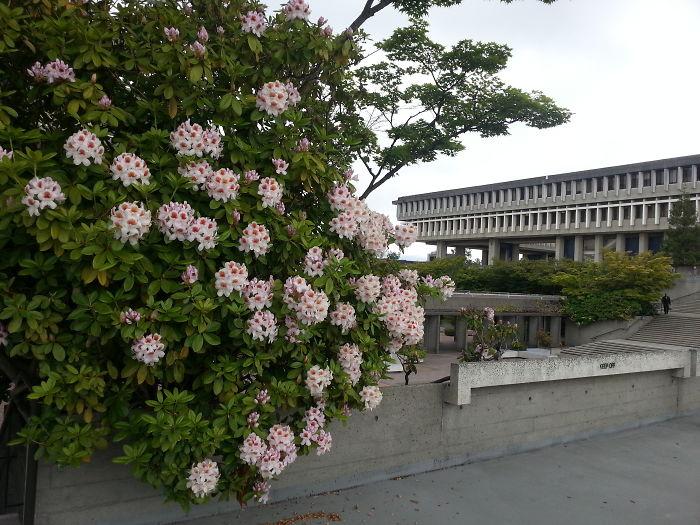My University – Sfu