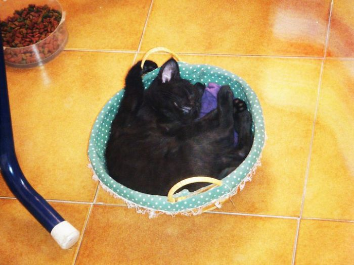 "Kuroi Relaxing In ""his"" Tiny Basket"