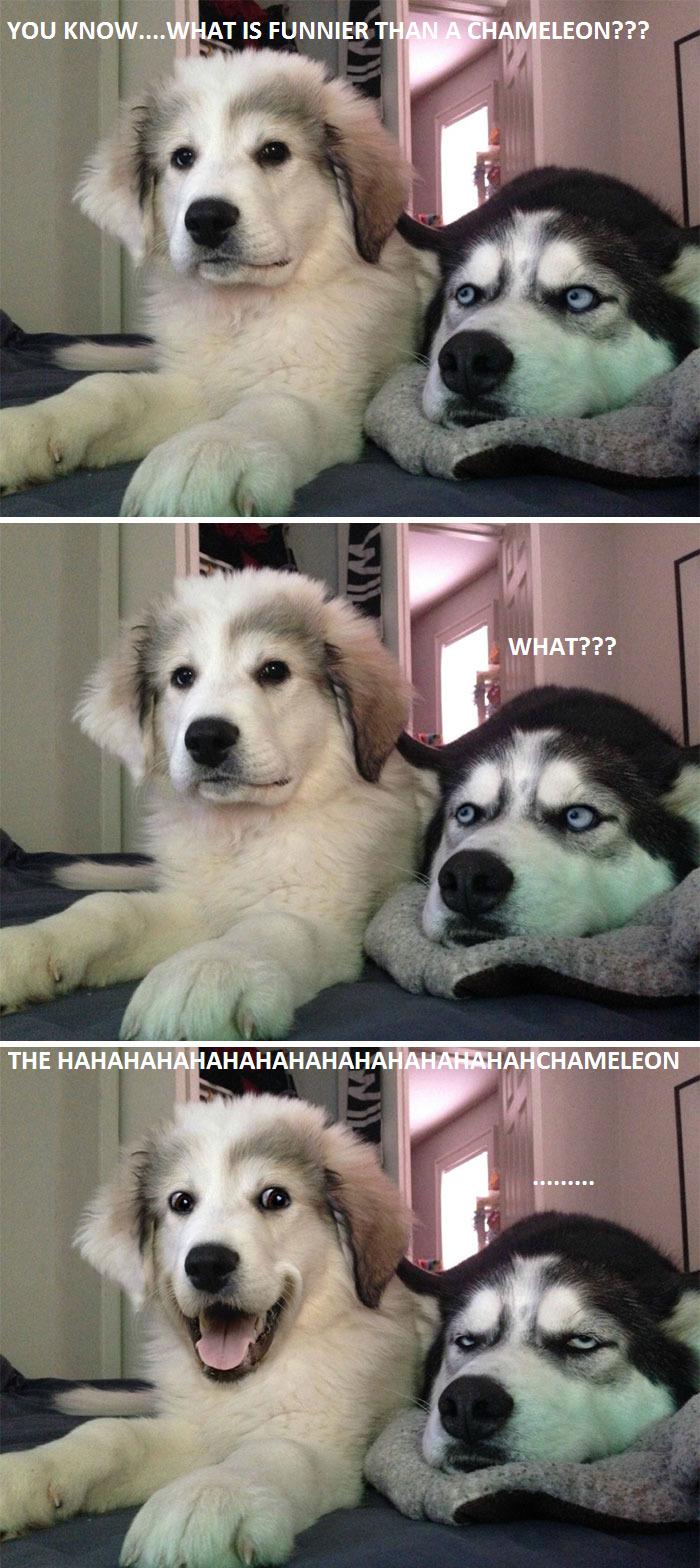 The Hahahahahachamelon…!