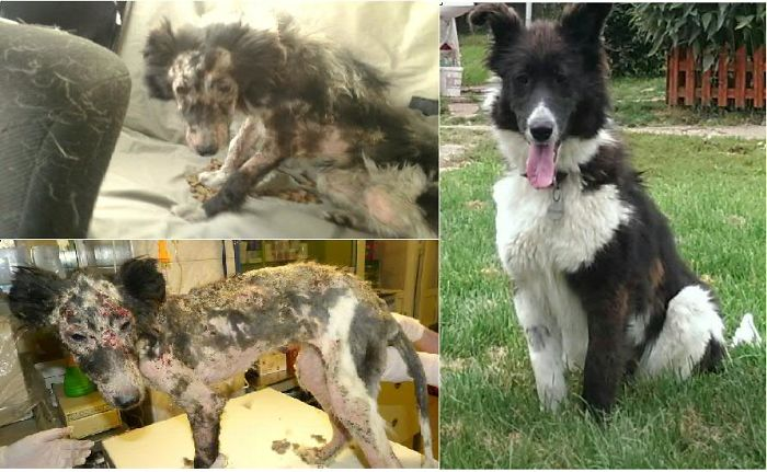 Mira - Found With Severe Mange - Before And After :)