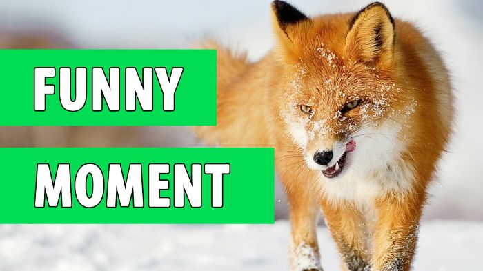 Funny Animal Moment Of May 2016