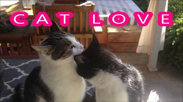 Cat Love Alert
