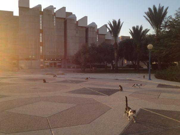 Ben-Gurion-University-5758341682844.jpg