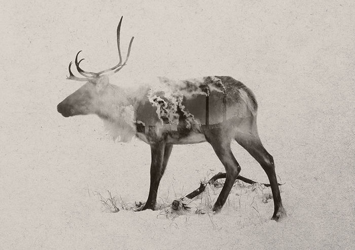 I Created Double Exposure Images Of Animals Threatened By Climate Change