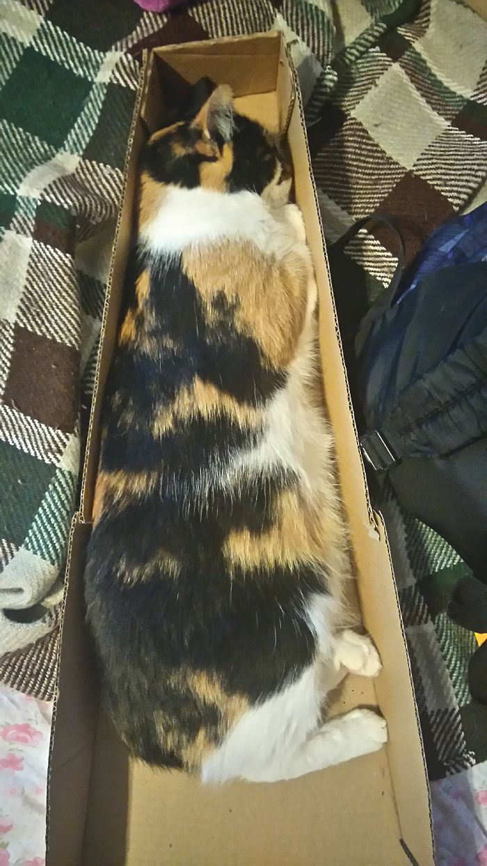 Just Casually Sleeping In An Ukulele Box, Looks Comfy