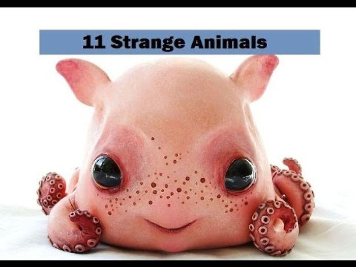 Worlds Weirdest Animals That Don't Exist Anymore