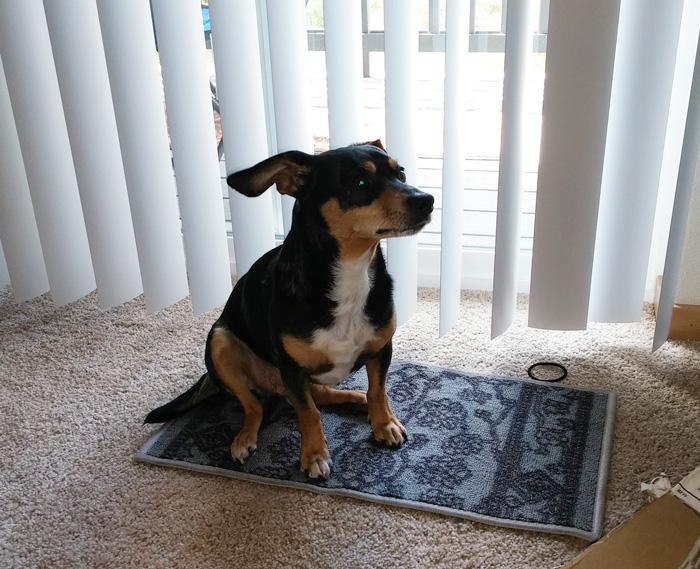 Thought The Dimensions Were Much Larger. Least My Dog Can Take A Magic Carpet Ride