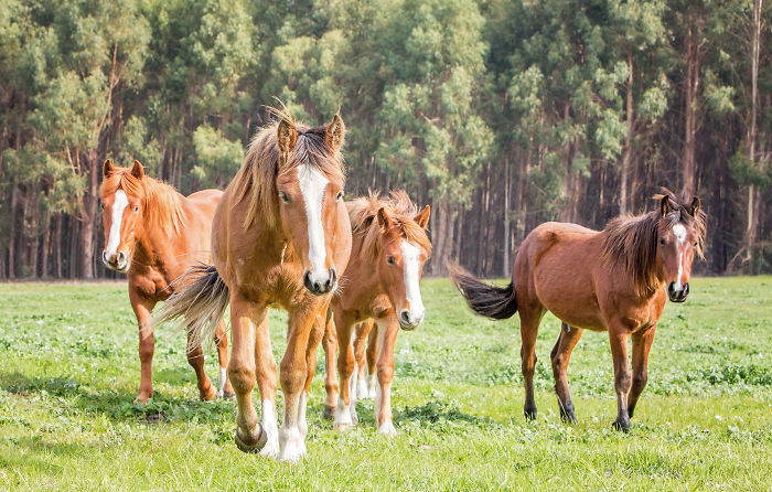 I Photographed Australia's Wild Brumbies And Fell In Love