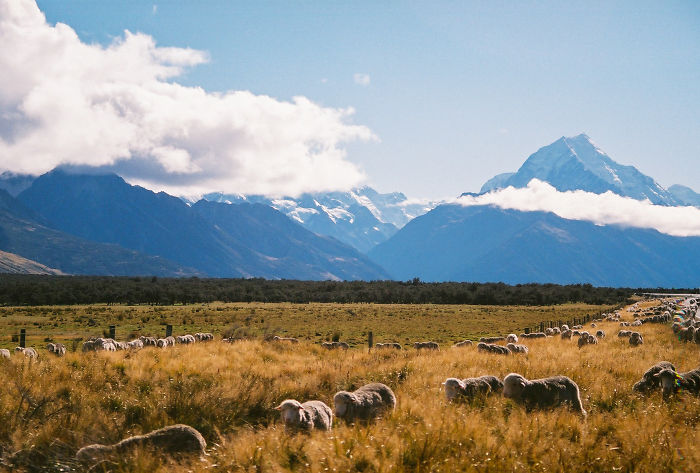 Picturesque New Zealand Through My Film Camera Lens (Part 2)