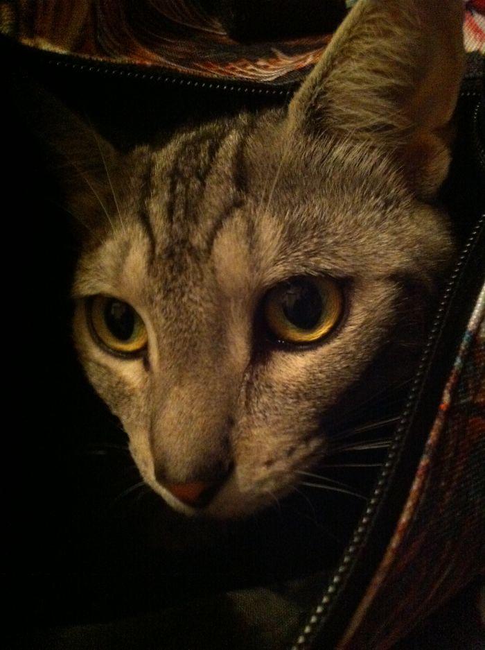 Karlie In Hiding