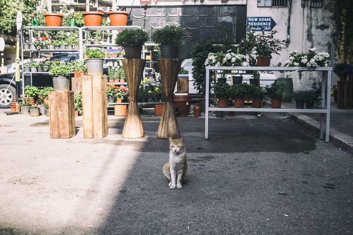 I Documented The Life Of A Homeless Cat For A Day