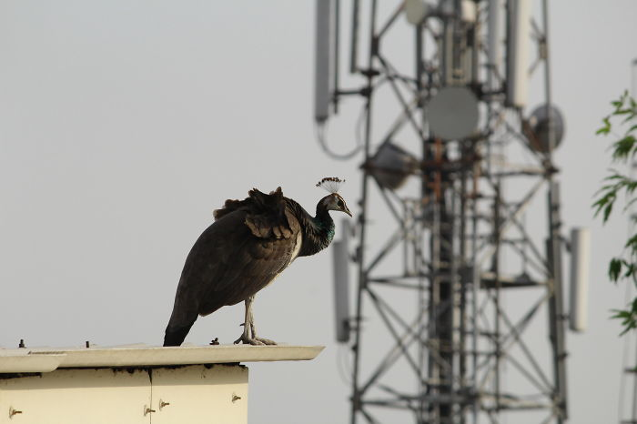 Monsoon Calling, India