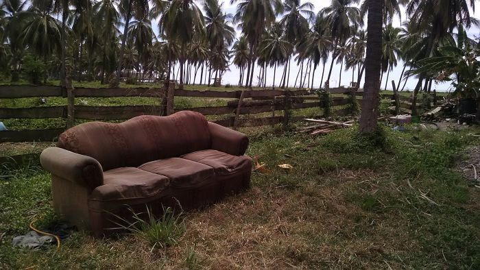 Sofa's In The Wild