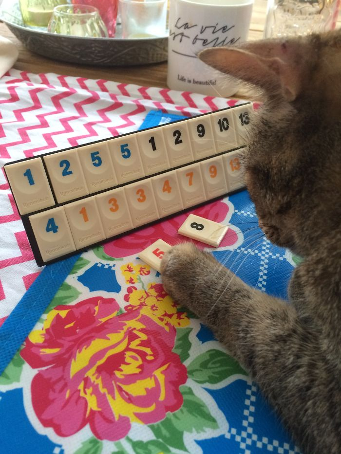 My Cat Bonbon Loves Playing A Game Of Rummikub