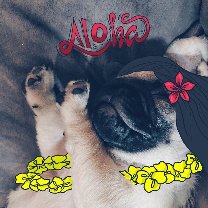 Alohaaa