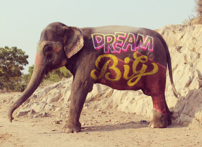 Part Of #IndiaThroughType Project – Type On Elephant