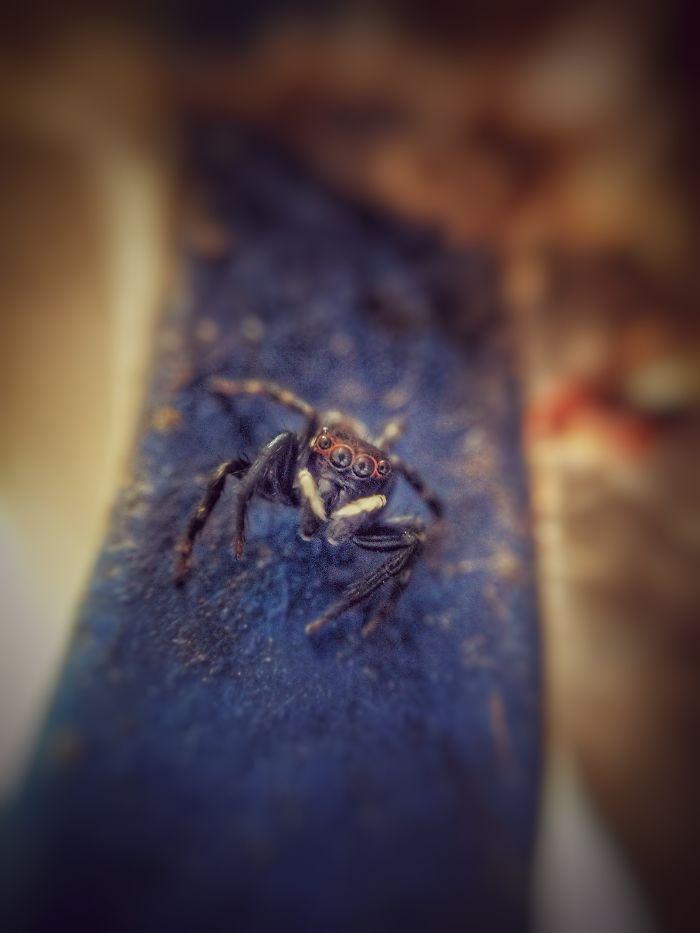 Spider – Macro Oooo