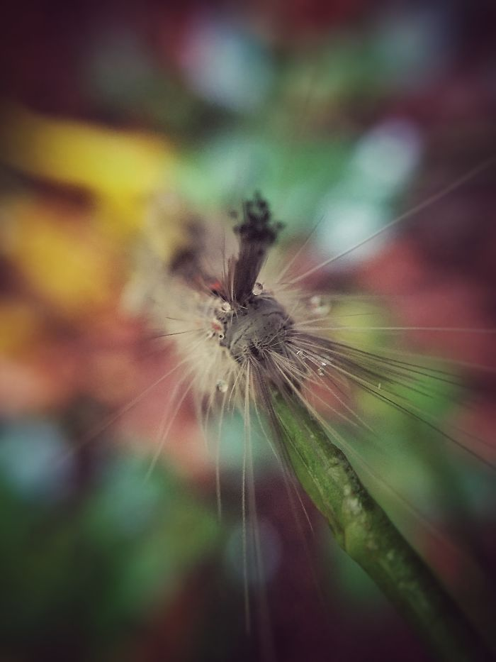 Don't Come Too Close – Iphone Macro