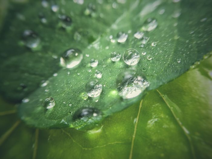 Macro(iphone) – Rain Droplets