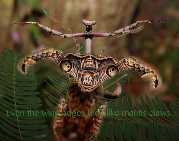 Mantis-Moth-claws-5762dadb08402.jpg