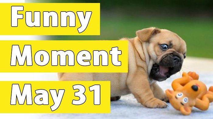 Anyone Like Funny Animal Videos!