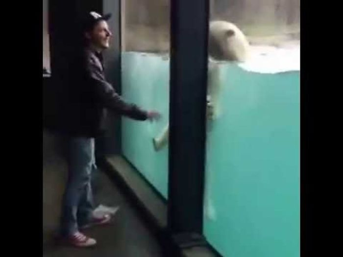 Chillin' With The Polar Bears At The Zoo