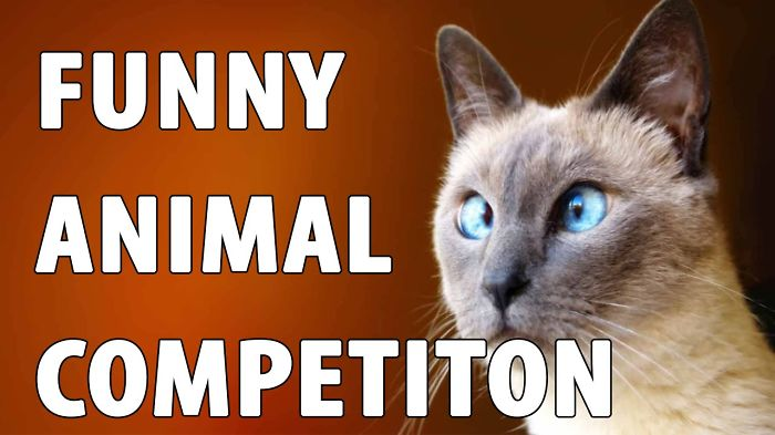 Funny Animal Competition June 12, 2016