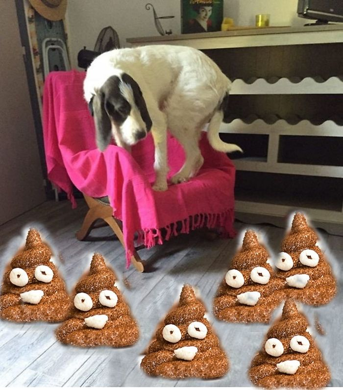 The Dog Is Scared Of His Poops Which Look Like Poop Emoji Marshmallow :)