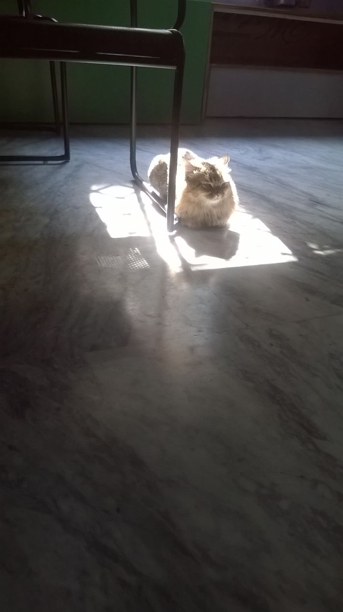 Patch Of Sunlight In The Middle Of The House : Detected.