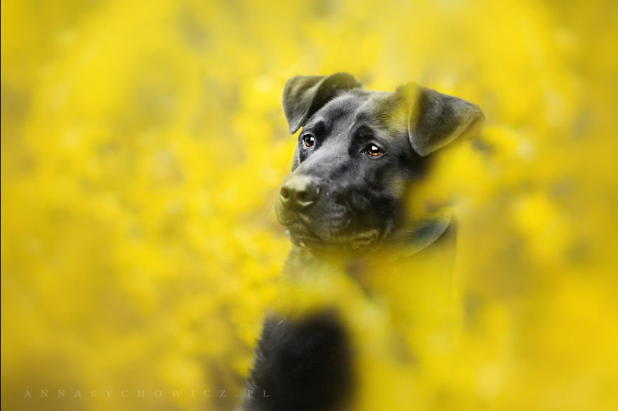 I Photograph The Emotions That You See In Dogs' Eyes
