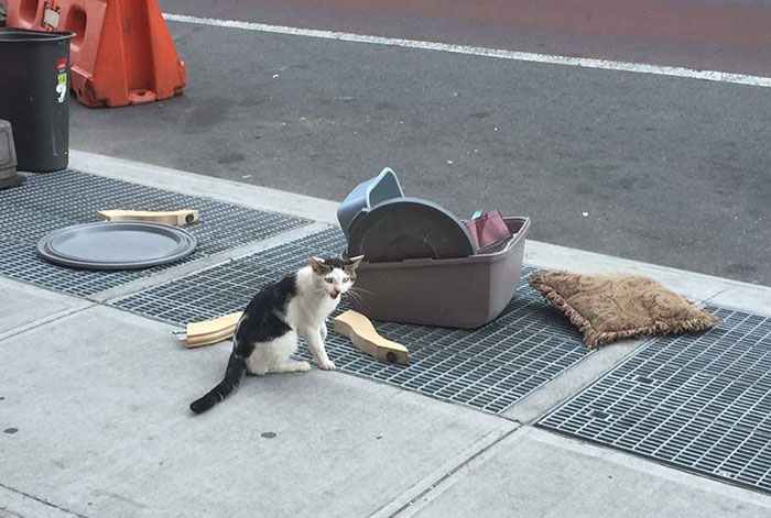 Someone Dumped A Cat On The Street With His Litter Box