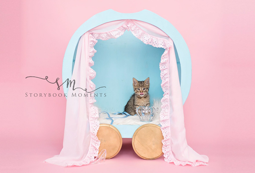 adopted-cat-photoshoot-newborn-storybook-moments-1