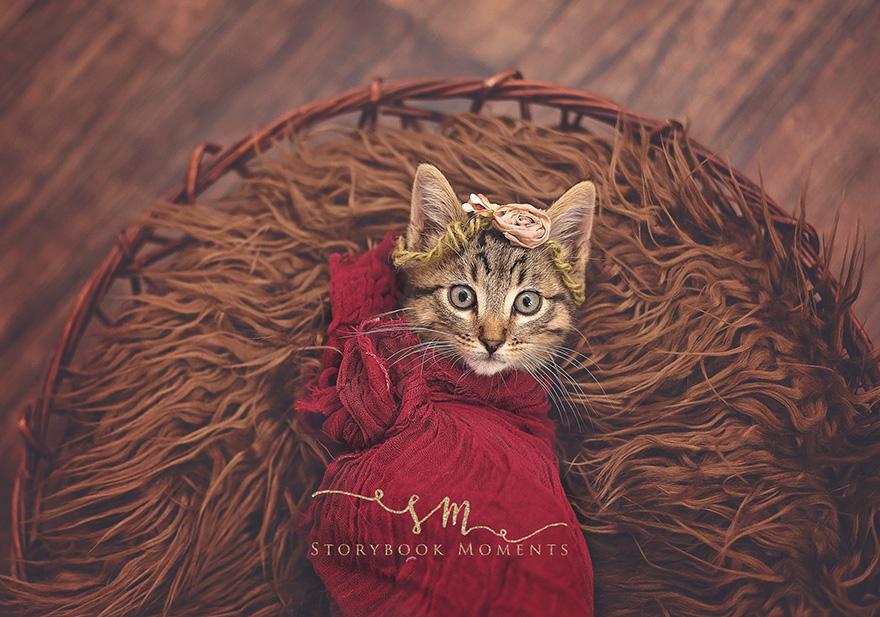 adopted-cat-photoshoot-newborn-storybook-moments-4