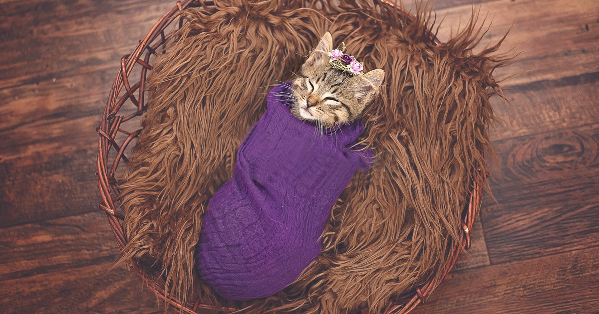 Daughter Demands Newborn Photoshoot For Her Stray Kitty Mother