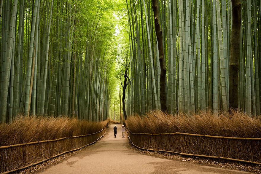 15 Reasons Why You Should Visit Japan Bored Panda